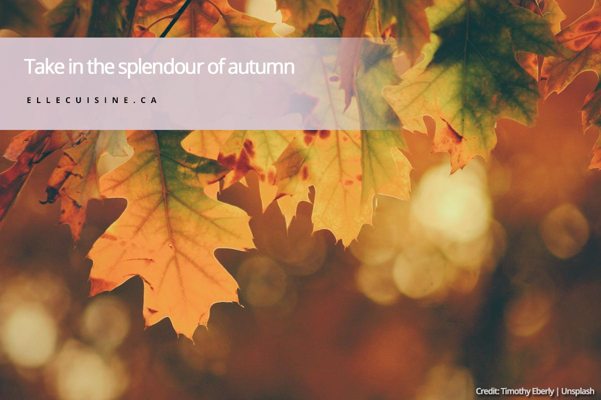 Take in the splendour of autumn