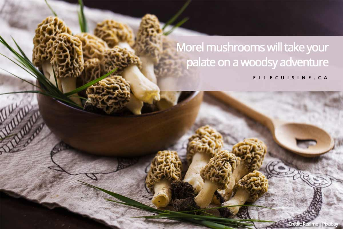 Morel mushrooms will take your palate on a woodsy adventure